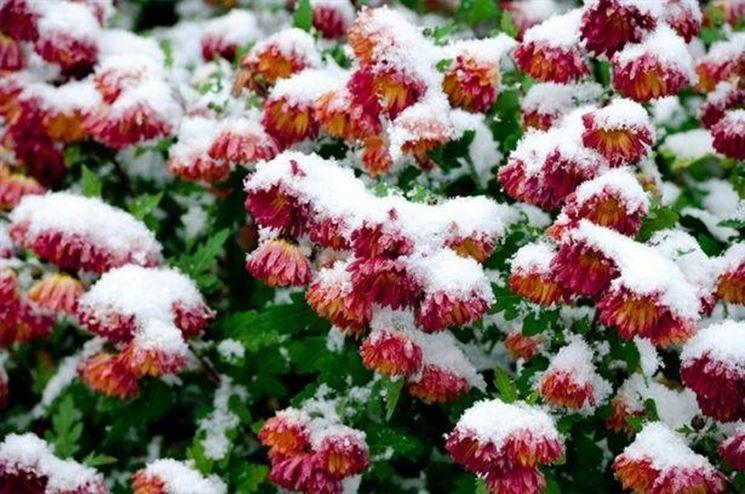 fiori in inverno