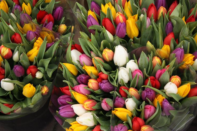 Tulipani di vari colori