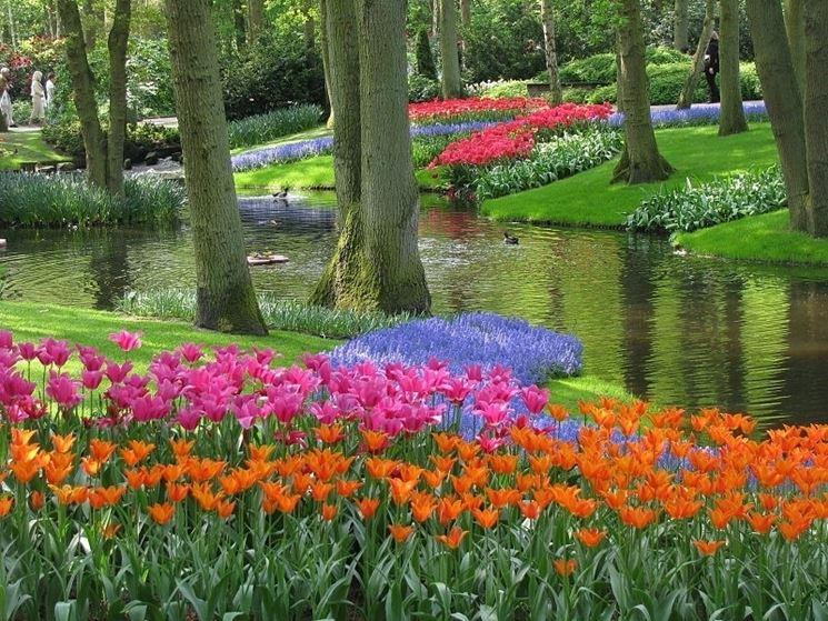 Paesaggio olandese con tulipani