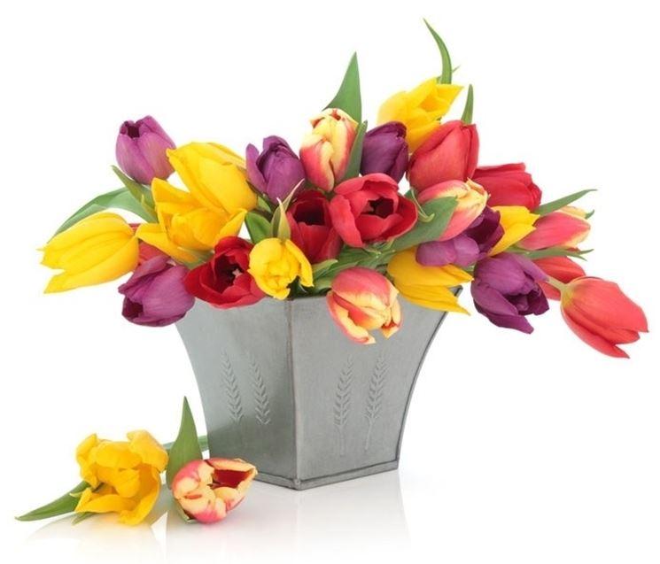 Bellissimo vaso di tulipani