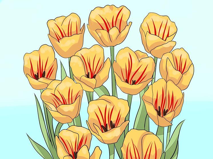 Cura e manutenzione tulipani