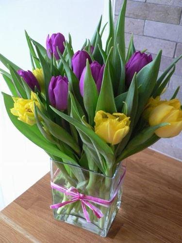 tulipani3-1