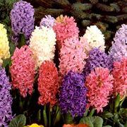 fiori nomi