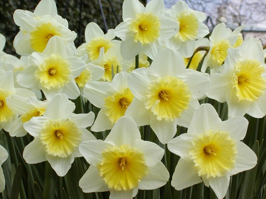 Tutti i nomi dei fiori - Bulbi - Nomi fiori