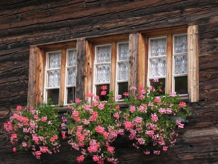 Il geranio � adatto a terrazze e balconi