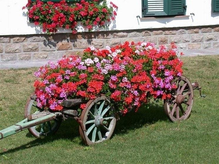 Decorazione da giardino con gerani