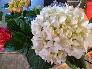 Ortensdai fiori bianchi