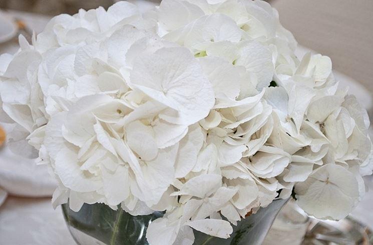 Centrotavola Ortensie Bianche : Ortensie bianche ortensia colore bianco
