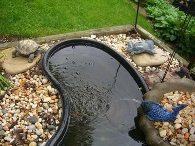 Costruire un laghetto piante acquatiche - Pesci per laghetto da giardino ...