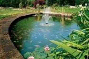 Laghetto piante acquatiche laghetto d 39 acqua for Piante da laghetto