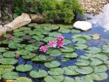 Laghetto piante acquatiche laghetto d 39 acqua for Kit laghetto da giardino