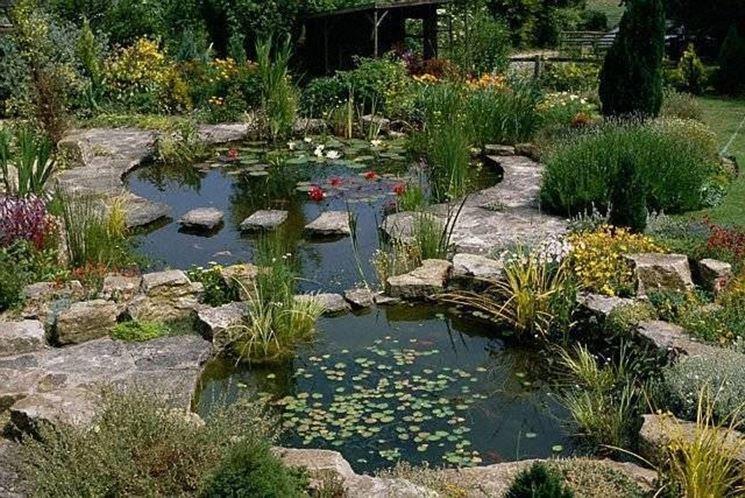 Piante amanti dell 39 umidit piante acquatiche for Costruire laghetto in giardino