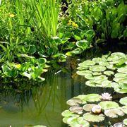 giardino con piante palustri