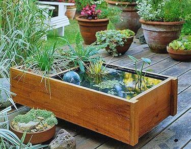 idea per piante palustri