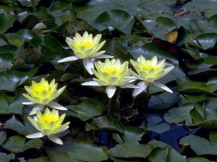 Scegliere e piantare le piante acquatiche