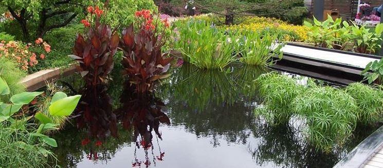 Scegliere e piantare piante acquatiche