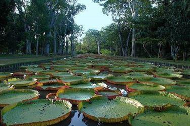Vendita piante acquatiche