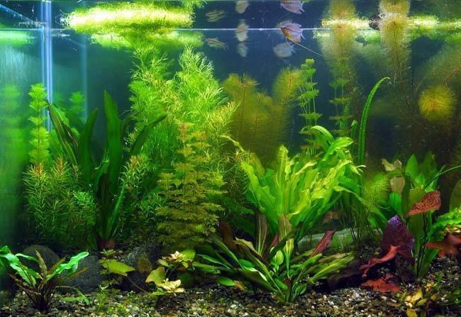 Piante Acquatiche Vendita : Vendita piante acquatiche