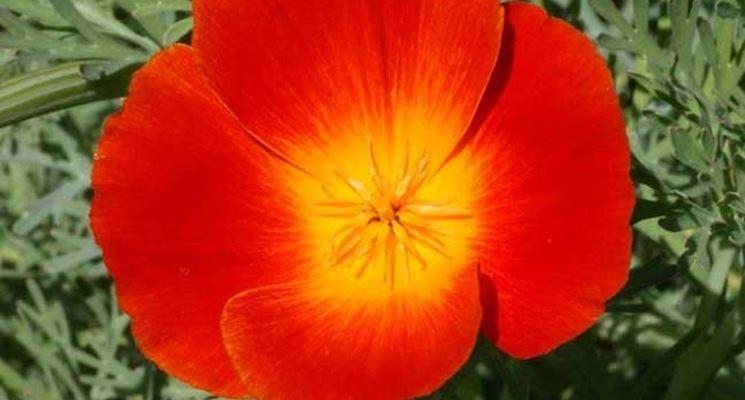 Esemplare a fiore rosso