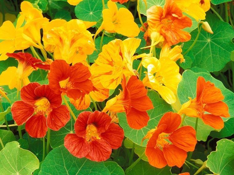 Fiori foglie