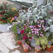 Vasi di gerani su terrazza