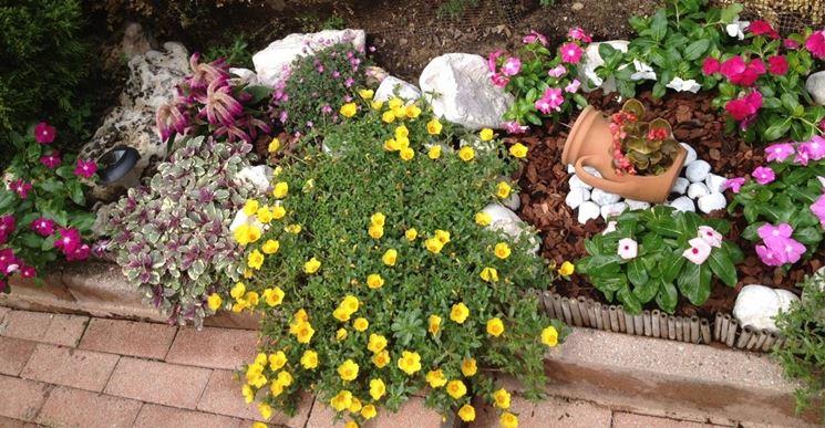 Una portulaca perenne dai fiori gialli in un giardino con rocce