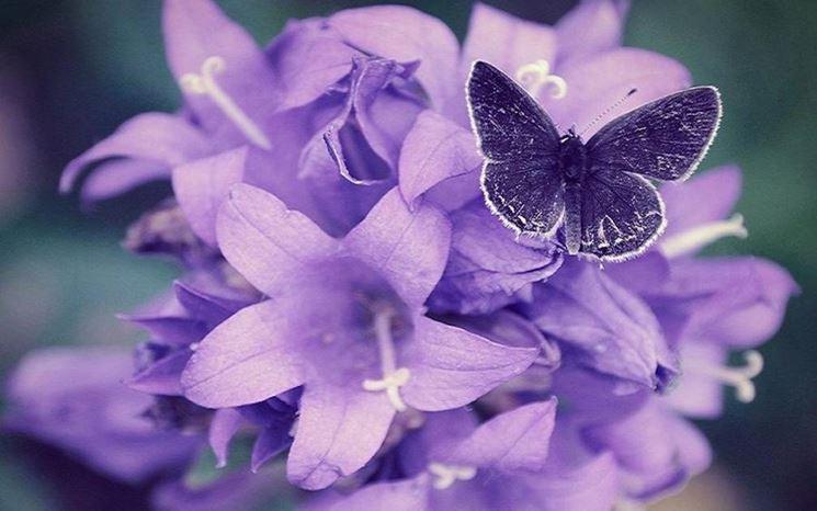 sfumature e farfalla