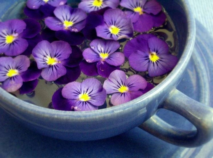 acqua con violetta