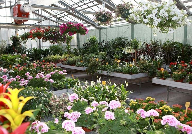 Giardino coltivato a cielo aperto.