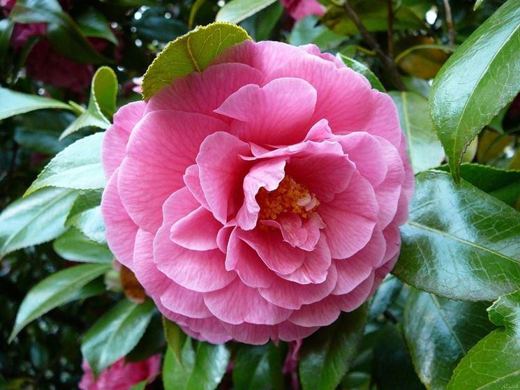Alberi da fiore piante da giardino alberi da fiore - Alberi da giardino di piccole dimensioni ...