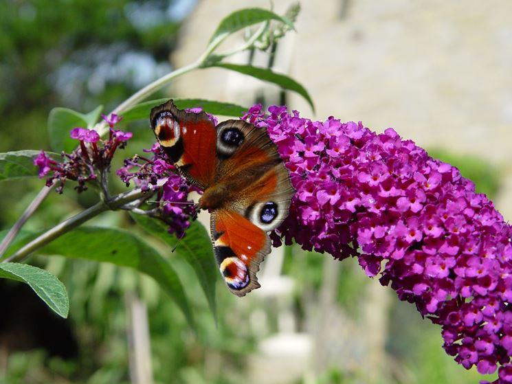 Dell'albero Delle Farfalle