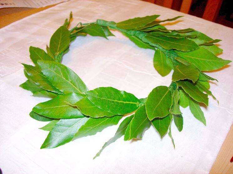 Alloro pianta Piante da giardino Pianta di alloro b44223fbfb58