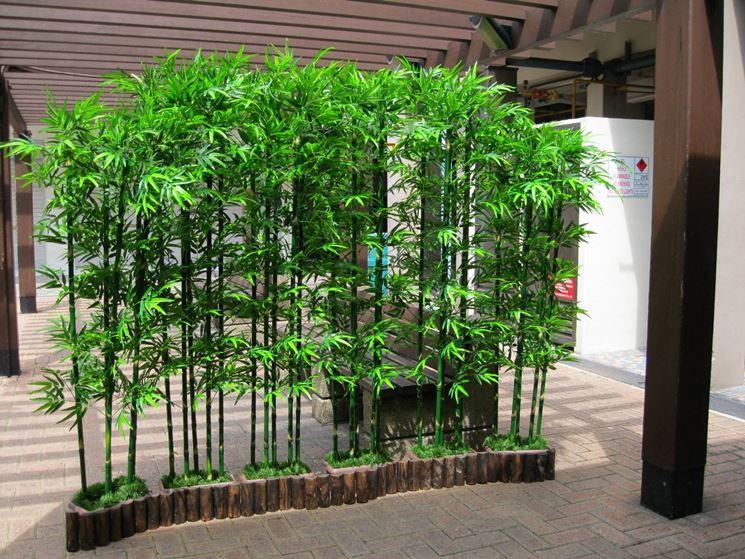 Piante di bamboo in vaso
