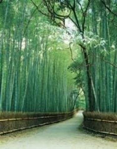 bambu2