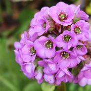 Il fiore di San Giuseppe
