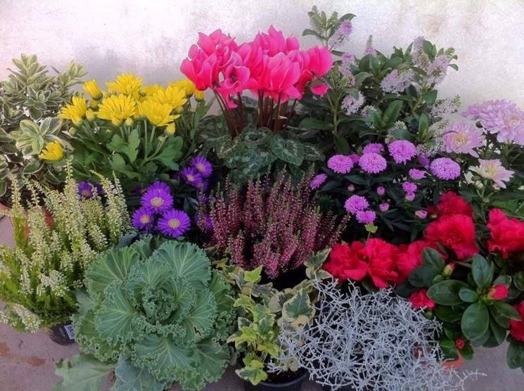 fiori invernali da balcone piante da giardino fiori
