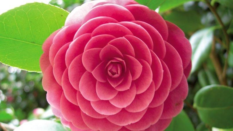 Fiori invernali da balcone piante da giardino fiori for Fiori particolari da giardino