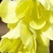 piante invernali da balcone
