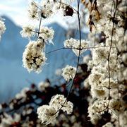 Esempio di fiori invernali