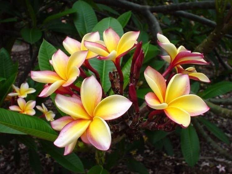 Un mazzetto di fiori che cresce sulla cima di un ramo di frangipane