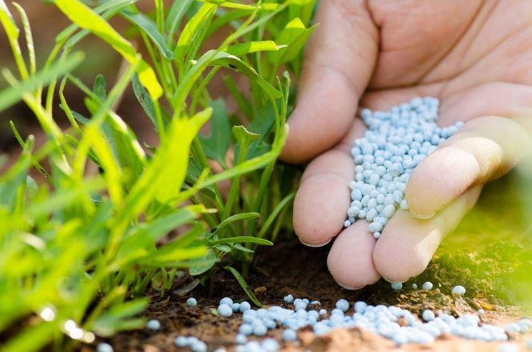 Fertilizzante a base di macroelementi