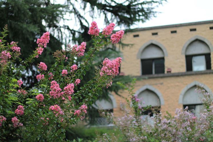 Pianta giardino fiore