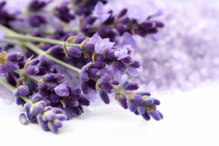 Anche se è un fiore molto forte è opportuno averne molta cura