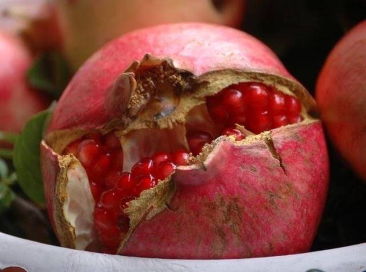 Un frutto del melograno