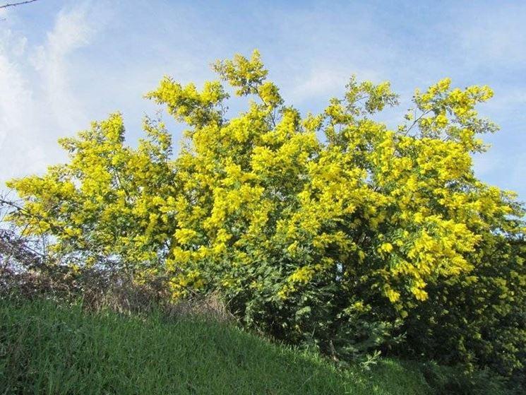 autostrada delle mimose in Costa Azzurra