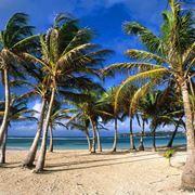 Piante di palme su una spiaggia