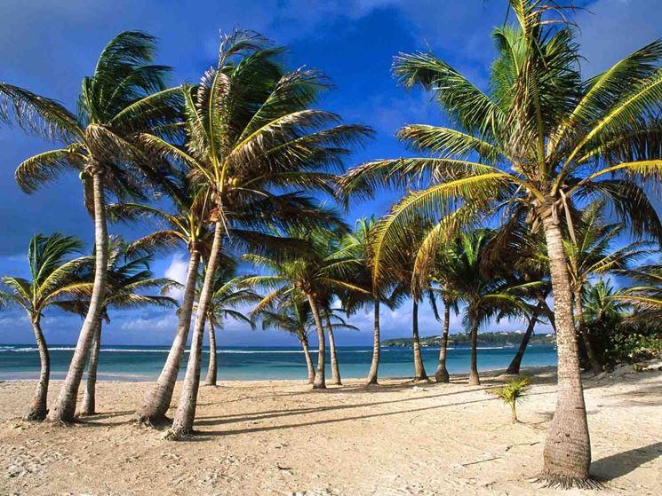 pianta palma piante da giardino caratteristiche della