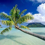 palma pianta