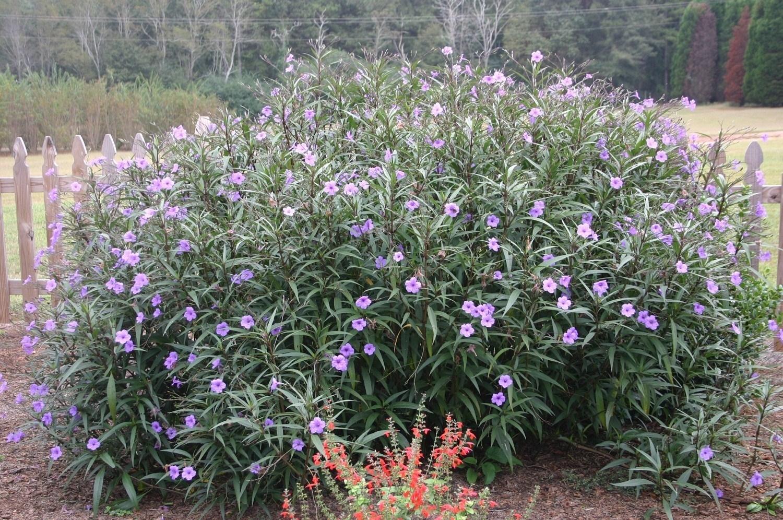 Pianta sempreverde piante da giardino pianta - Sempreverde da giardino ...