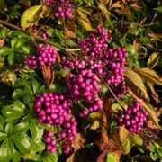 pianta con foglie rosse